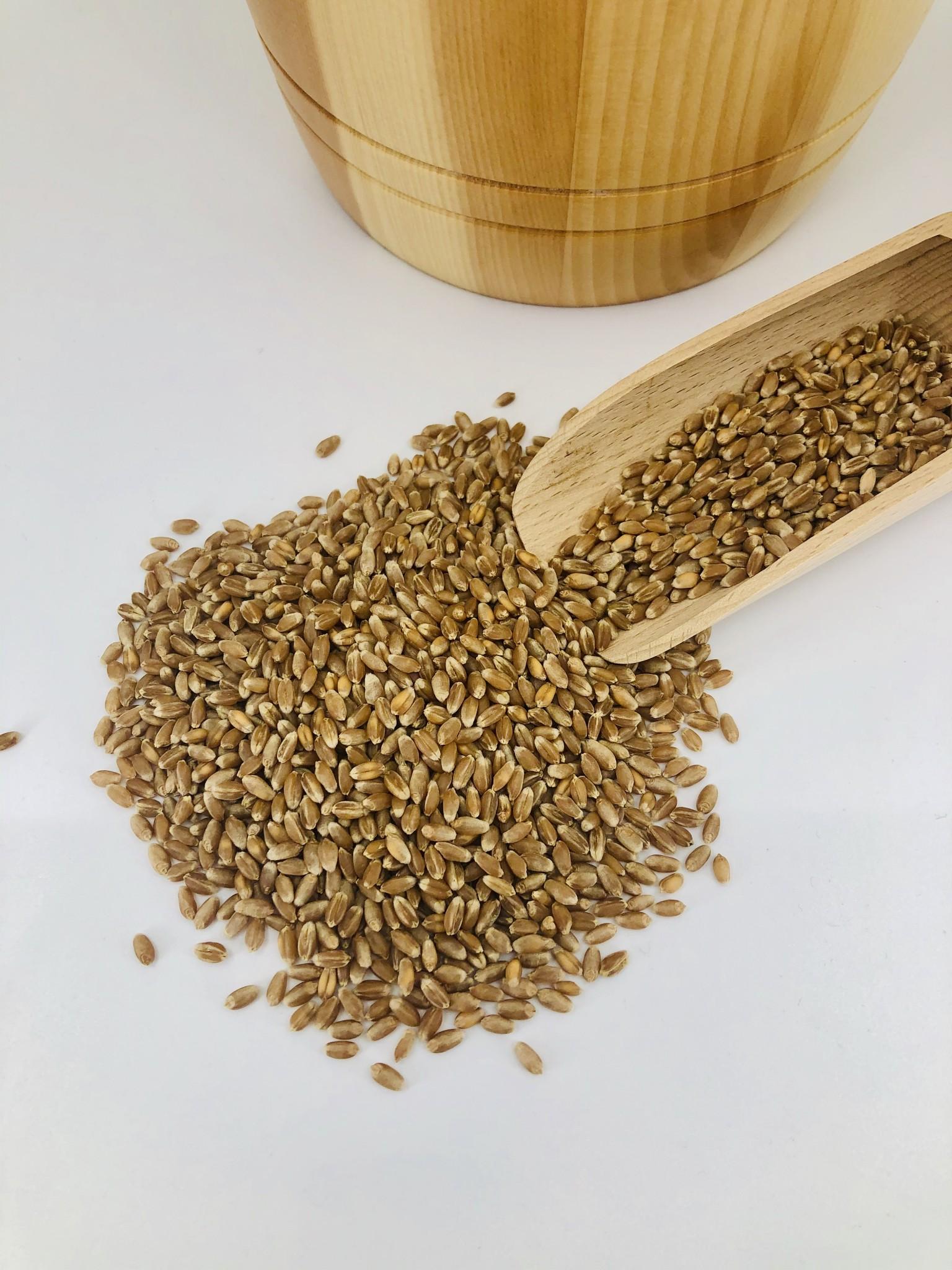 Opciós gabona termékek - Bet site