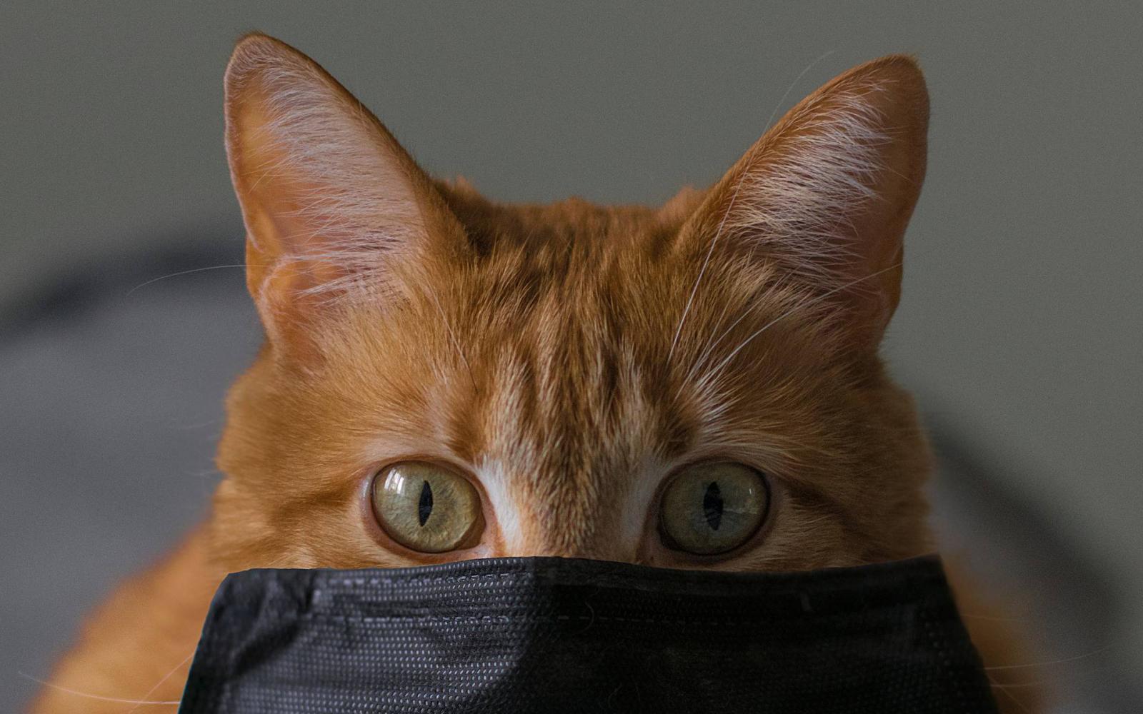 Macskavédők arcképcsarnoka